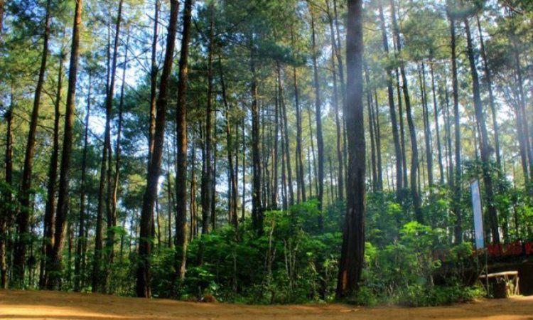Hutan Pinus Girimulyo