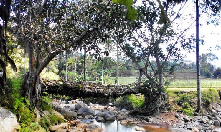 Jembatan Akar Santoaan