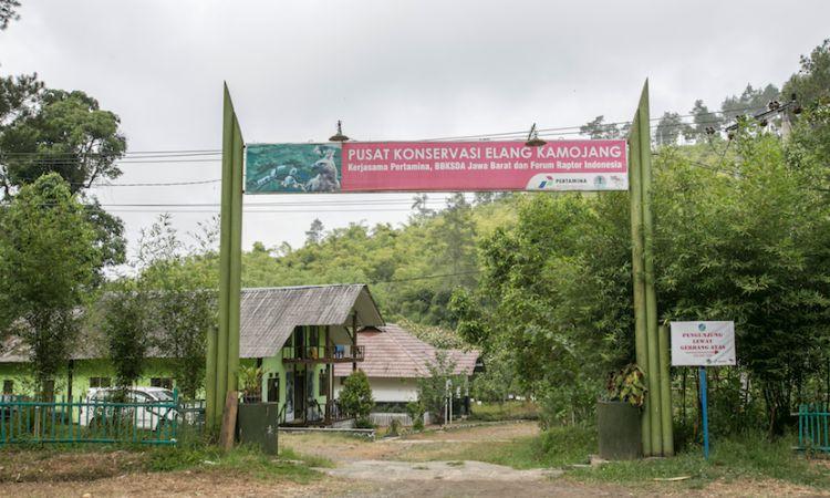 Pusat Konservasi Elang Kamojang