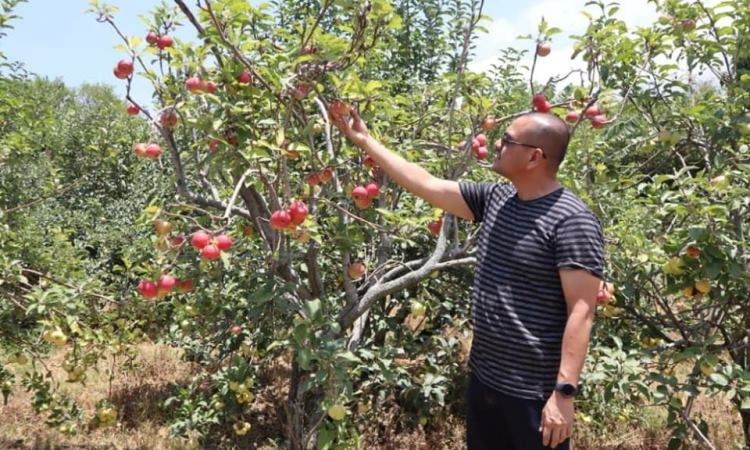 Kebun Apel Khrisna