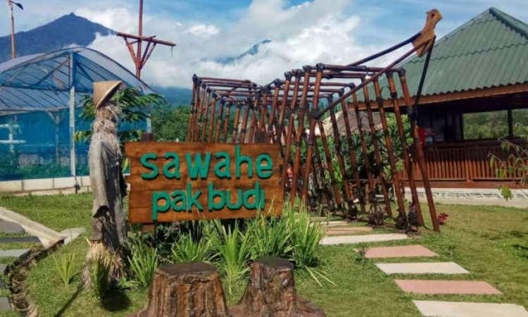 Sawahe Pak Budi
