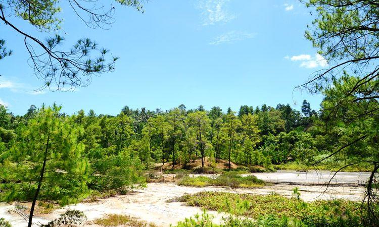Hutan Lahendong
