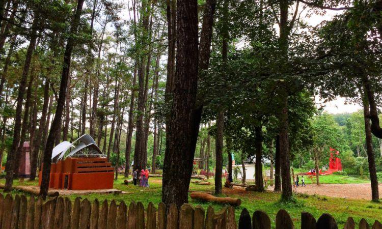 Wisata Alam Hutan Punti Kayu