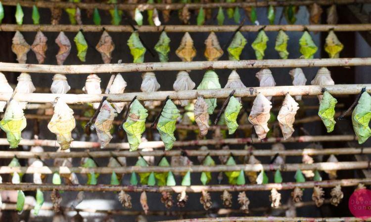 Banteay Srei Butterfly Center