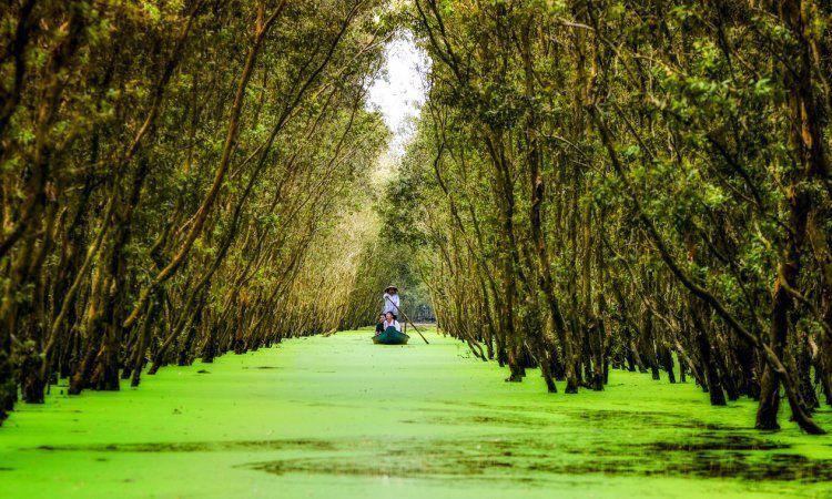 Hutan Xeo Quyt