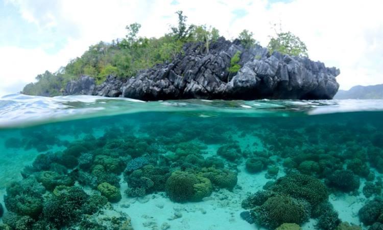Pulau Hari