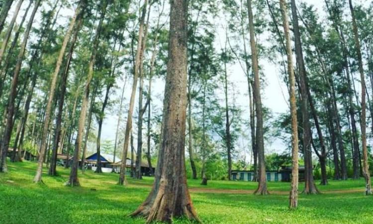 Hutan Pinus Samboja