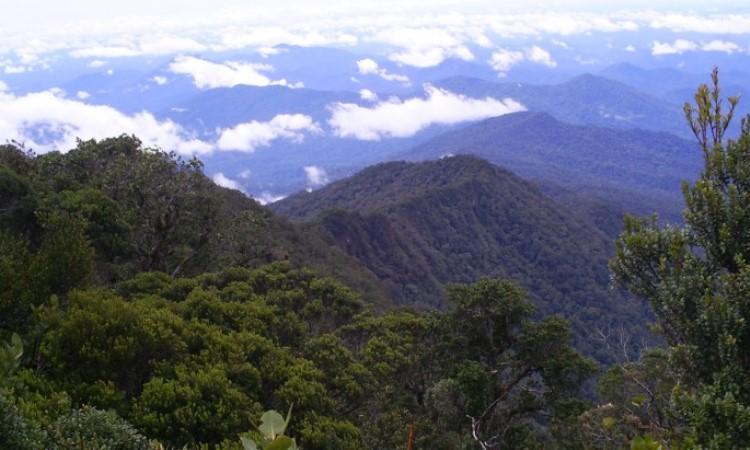 Taman Nasional Bukit Raya