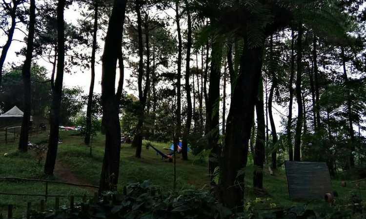 Bukit Pinus Panyawangan