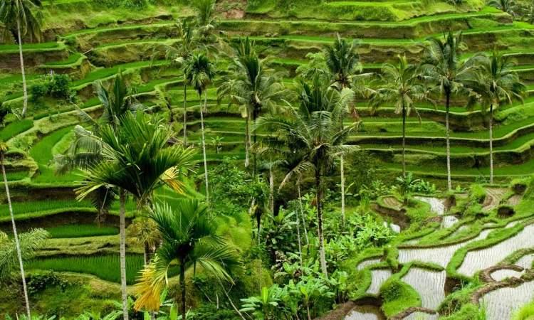 Desa Wisata Ubud