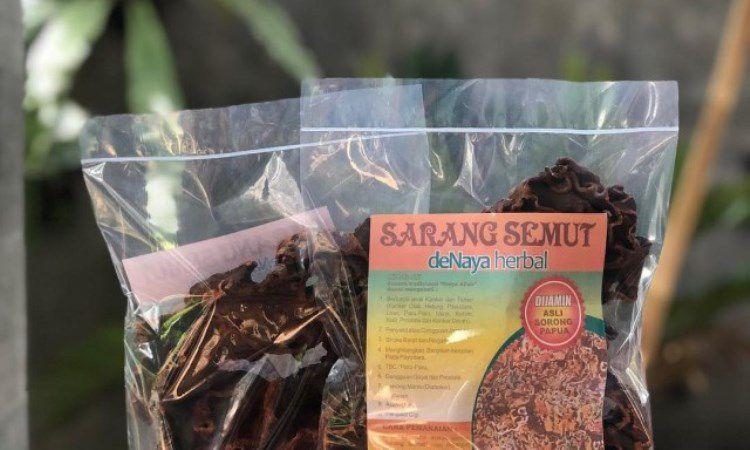 Sarang Semut