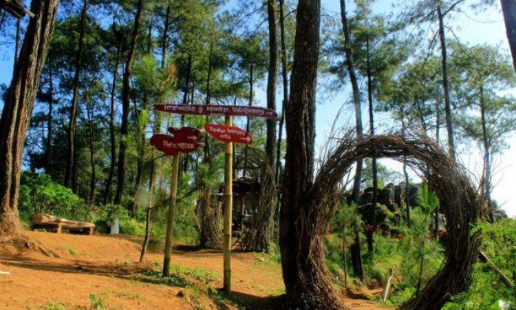 Hutan Alam