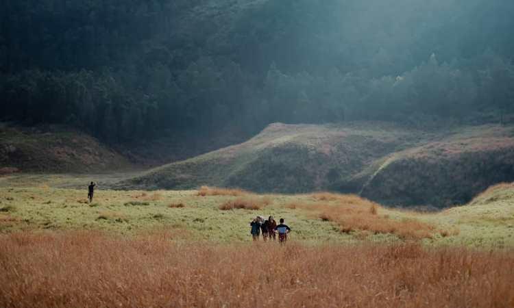 Padang Savana Dieng