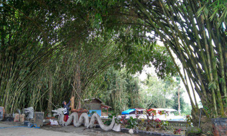 Hutan Bambu Lumajang