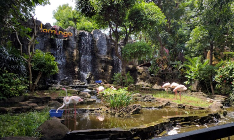 Maharani Zoo Lamongan