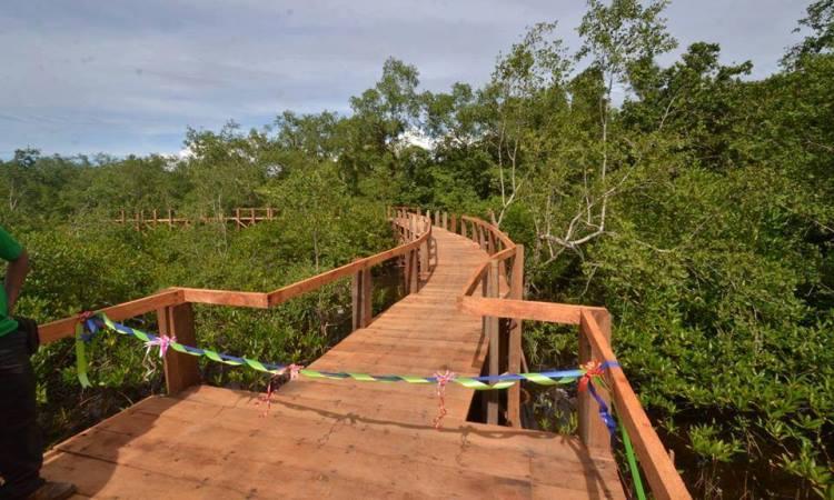 Taman Hutan Mangrove Pariaman