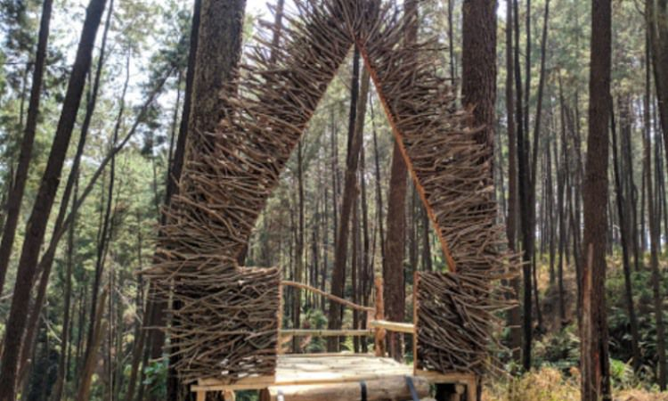 Hutan Pinus Setro Batealit