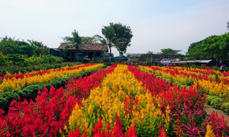 Kebun Bunga Ambal