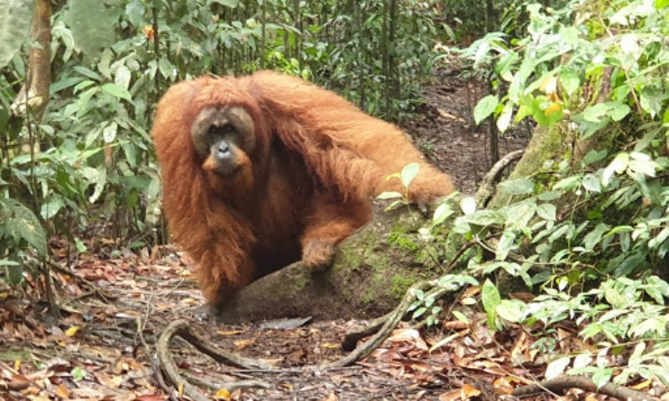 Bukit Lawang Ecotourism & Ecoproject