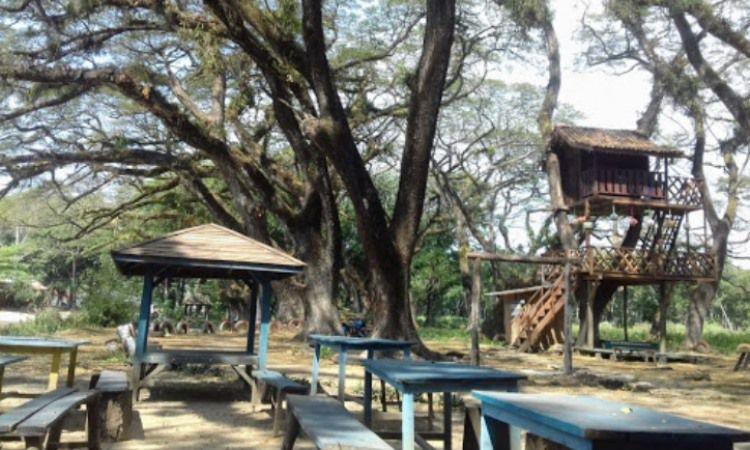 Rumah Pohon TPK Jatirogo Tuban