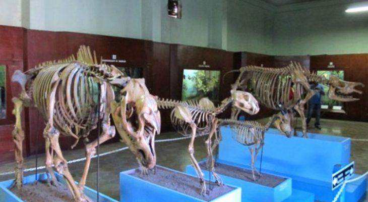 10 Museum di Bogor yang Populer Sebagai Wisata Edukasi