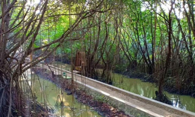 Pantai Wisata Mangrove