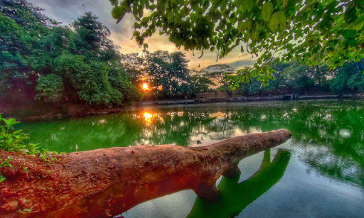 Taman Hutan Kota Srengseng